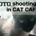 h.NAOTO SHOOTING EVENT 第2弾ネコ好きさん集まれ!in CAT Cafe 9/23